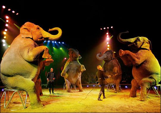 http://dallasentertainmentjournal.com/wp-content/uploads/2013/08/circus.jpg
